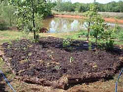 sheet mulch bed